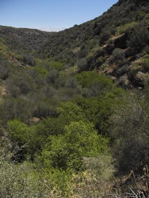 Dichte Vegetation im Grund des Tals