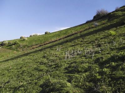 Grüne Wiesen auf Gran Canaria