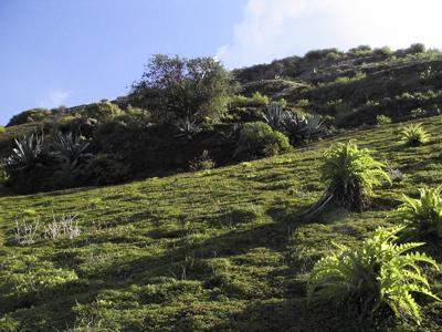 Foto der Vegetation im Winter