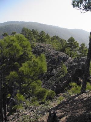 Kiefernwald von Tamadaba im Nordwesten von Gran Canaria