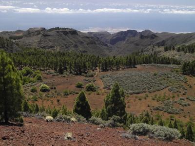 Bild des Oberteils des Barranco de Guayadeque