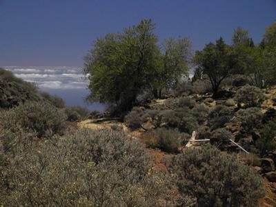 Bild der Vegetation im Zentrum