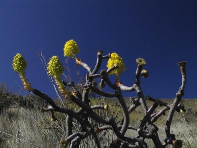 Blüten im Herbst auf Gran Canaria