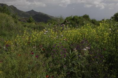 Blumenwiese, Wanderung Valsequillo