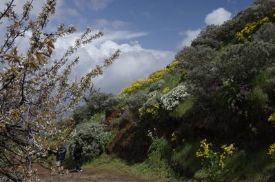 Blühende Bäume und Sträucher auf Gran Canaria
