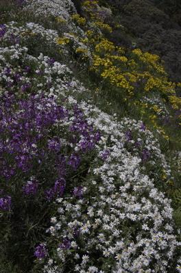 Blumengarten bei Valsequillo