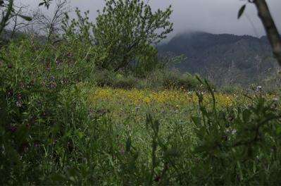 Blumen im Frühjahr, Gran Canaria