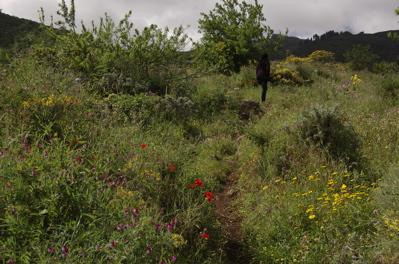 Wanderpfad in Gran Canaria