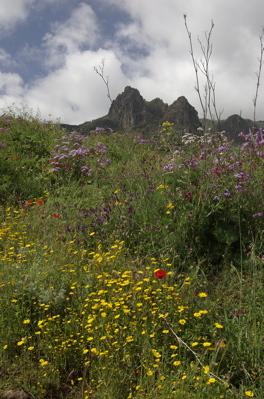 Blühende Wiese vor dem Roque Grande