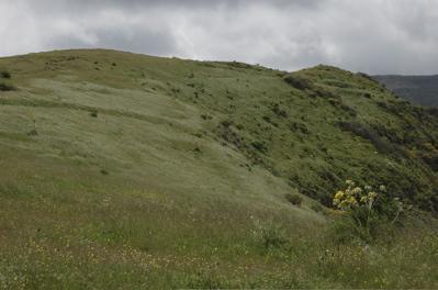 Grüne Wiesen in Gran Canaria