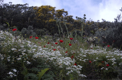 Bunte Blumen in Gran Canaria