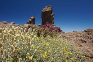 Wandern im Zentrum von Gran Canaria