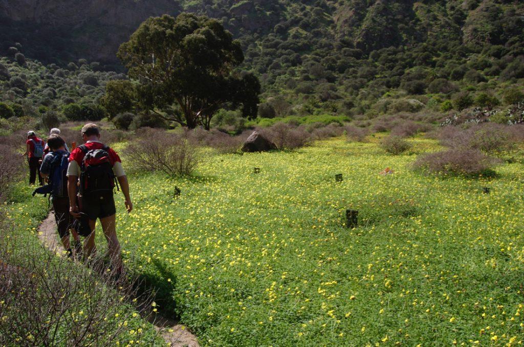 Wandergruppe in gelb blühender Kleewiese im Kratergrund des Bandama
