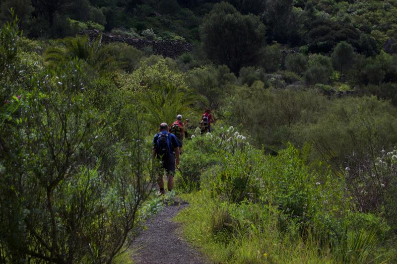 Wanderweg durch den Buschwald von Gran Canaria im Bandamakrater