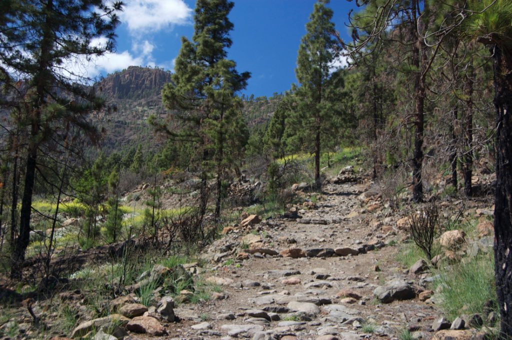 Camino Real, Königsweg von Cruz Grande nach San Bartolome im Kiefernwald