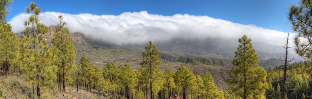 Kiefernwald und Wolkenwasserfall über die höchsten Berge von Gran Canaria, oberhalb von San Bartolome